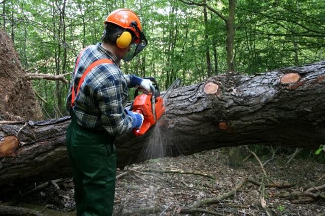 tree-services-bradford